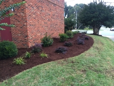 Cont Landscaping and Grading_1.jpg