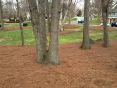 Cont Landscaping and Grading_7.jpg