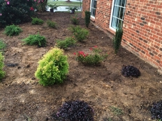 Lawn Care and Landscaping_6.jpg