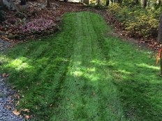 Land Clearing and Lawn Care_7.jpg