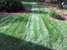 Land Clearing and Lawn Care_8.jpg