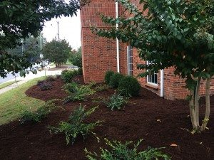Lawn Care and Landscaping_10