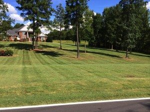Lawn Care_15
